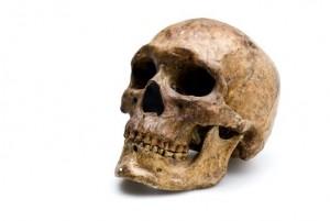 Homo Sapiens (skull & lower jaw)